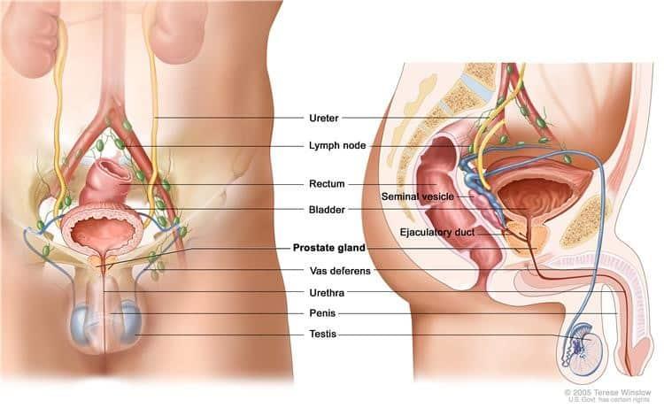 intervento prostata tubo del sangue 2017